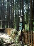 oplocení nejcennější části Boubínského pralesa