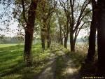 stará alej mezi Satalickou bažantnicí a Vinořským parkem